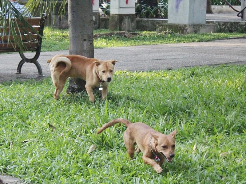 5 cách để giữ an toàn cho thú nuôi trong nhà
