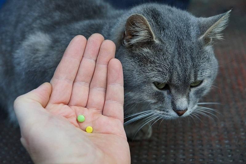 5 Quy tắc về thuốc men cho thú nuôi