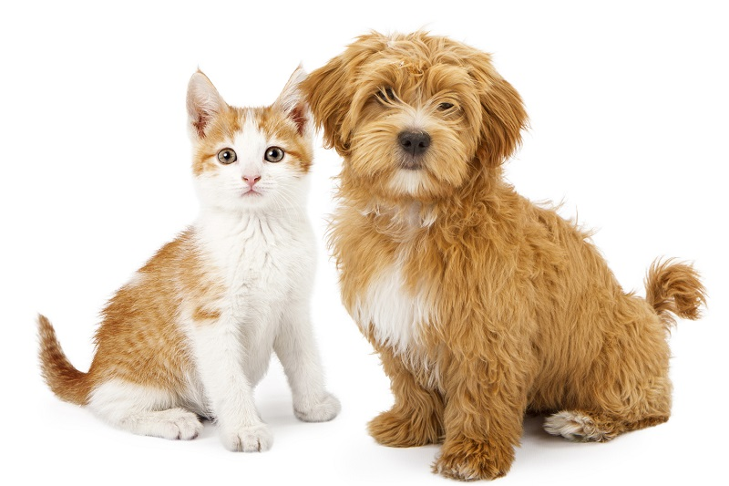 Trả lời câu hỏi giữa thú nuôi và Covid 19
