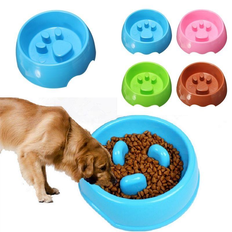 Gợi ý thay đổi thức ăn cho chó theo từng giai đoạn