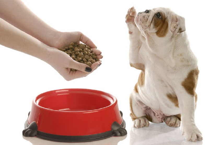 Thức ăn cho chó: Cách lựa chọn thức ăn tốt nhất