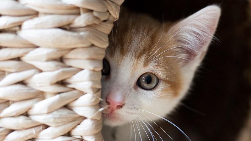 5 cách làm Pate – thức ăn cho mèo ngon tuyệt