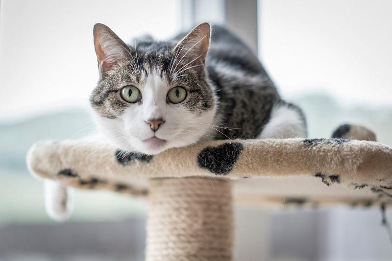 Bổ sung thức ăn cho mèo đảm bảo dinh dưỡng
