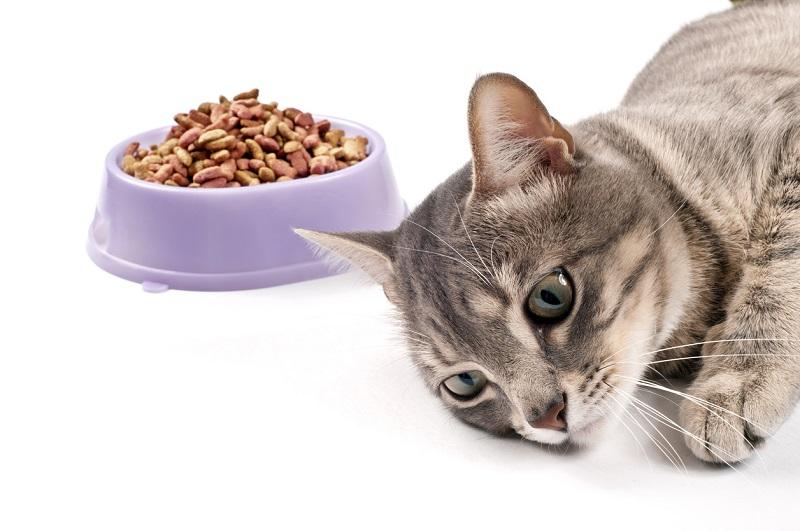 Những sai lầm cần tránh khi cung cấp thức ăn cho mèo
