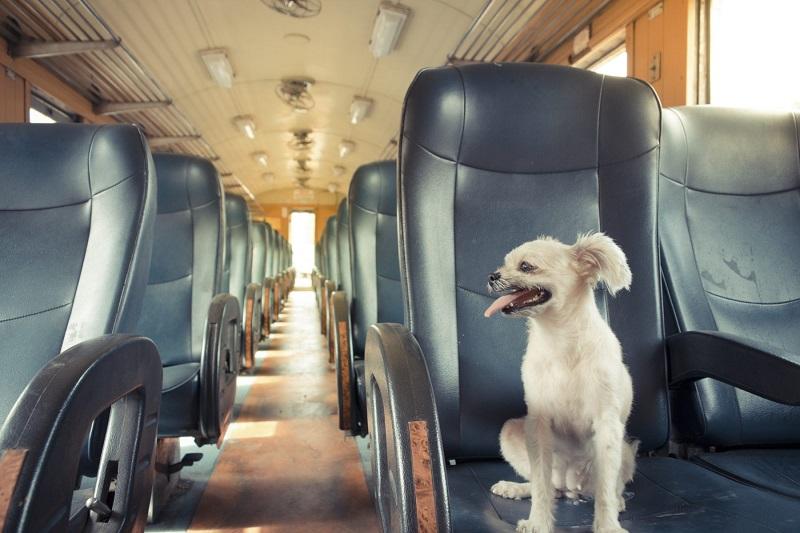 Điều kiện vận chuyển thú cưng bằng máy bay