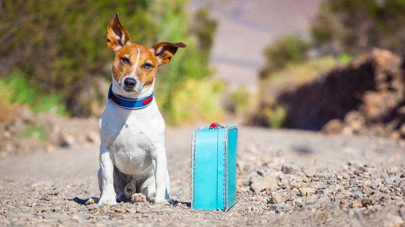 Mẹo vặt vận chuyển thú cưng đi khắp thế gian