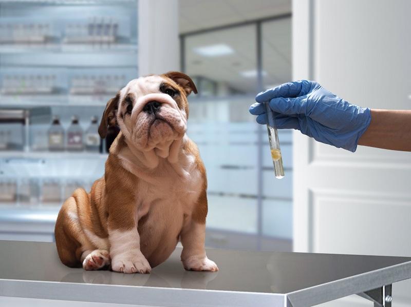 Những loại vắc xin cần thiết cho vật nuôi của bạn