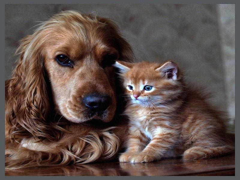 Cách bổ sung vitamin – chăm sóc thú cưng đúng cách