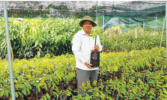 Top 10 trại cây giống nhiều chủng loại uy tín tại Hải Phòng